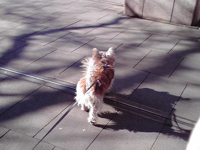 2月5日まきちゃん犬