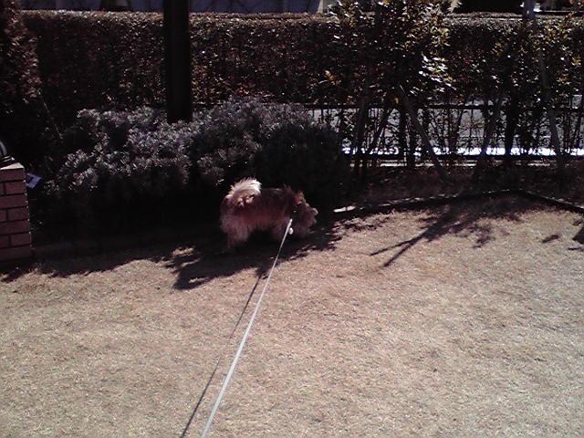 2月7日春犬