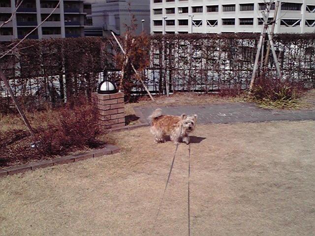 2月9日遊ぶ犬