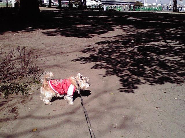 2月10日春節犬