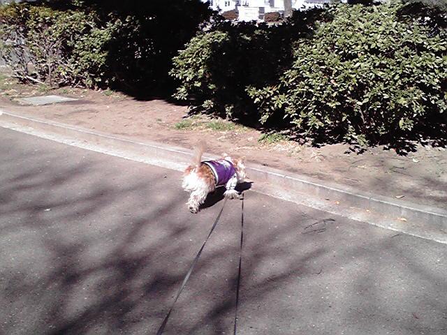 2月16日考える犬