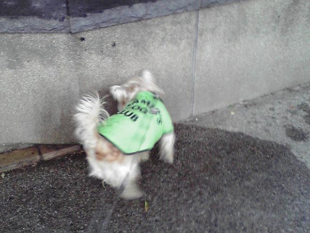 2月18日会議犬