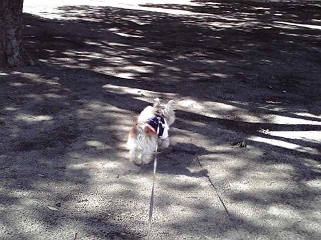 2月20日国語犬
