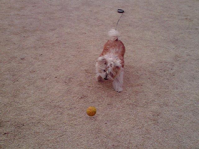 2月22日遊ぶ犬