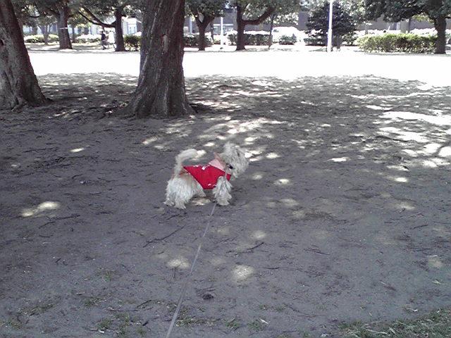 2月26日チャーミング犬