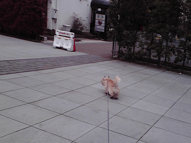 3月31日寒い犬