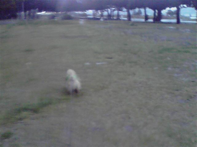 4月2日雨の中の犬