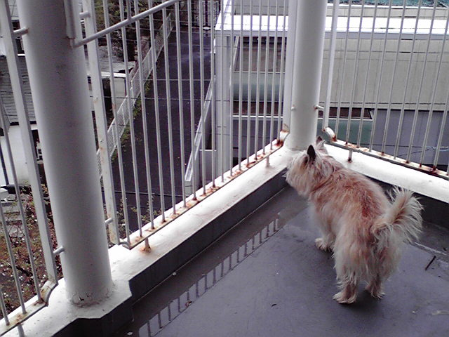 4月3日雨風犬