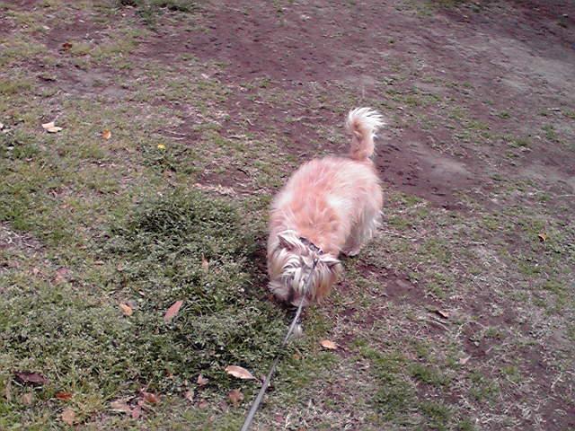 4月10日ハナミズキ犬