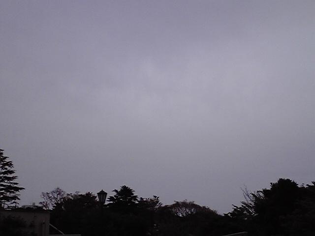 4月17日曇天犬
