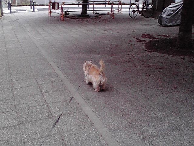 4月19日寒の戻り犬