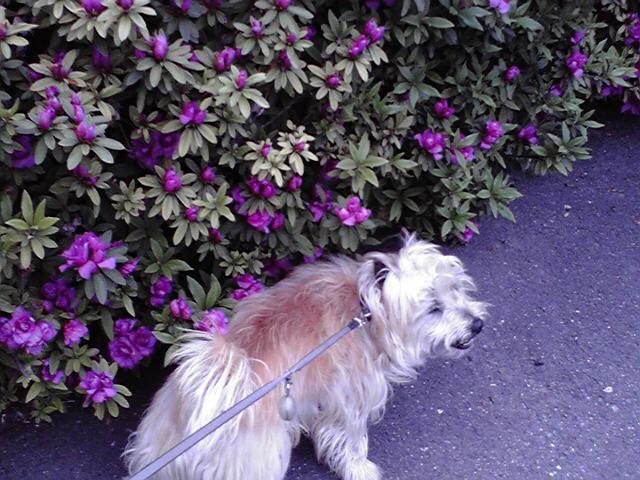4月20日追悼犬