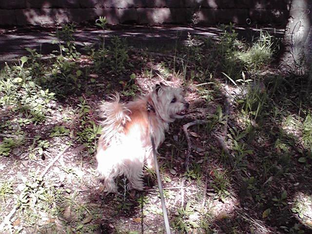 5月2日具合の悪い犬