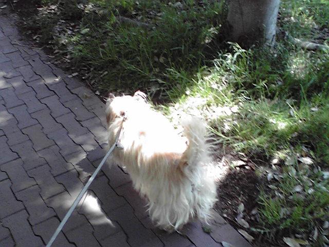 5月3日回復中の犬