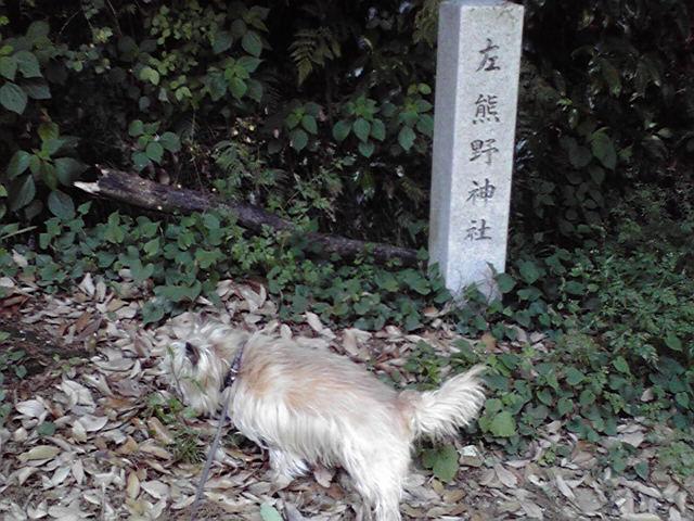 5月6日朝夷奈切通犬