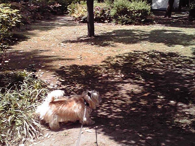 5月9日暑い犬