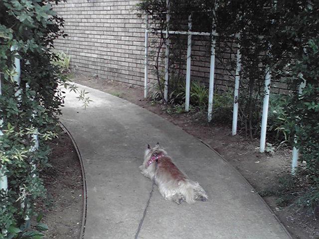 6月9日ラベンダー犬
