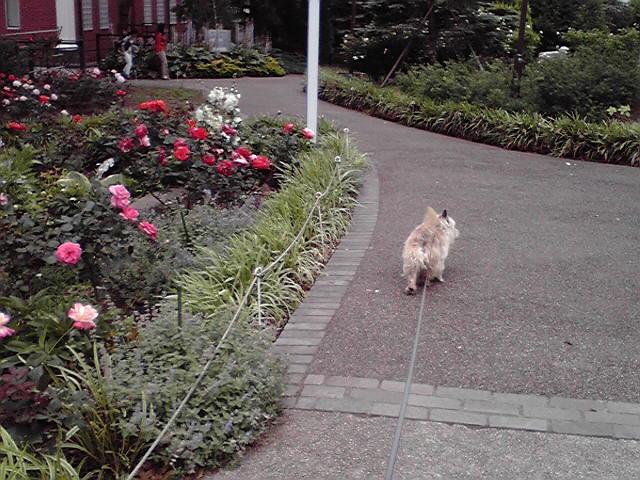 6月10日食べない犬