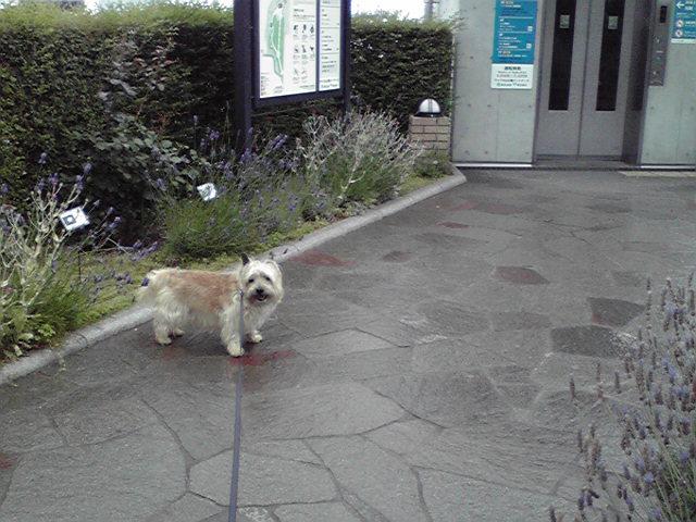 6月11日雨犬