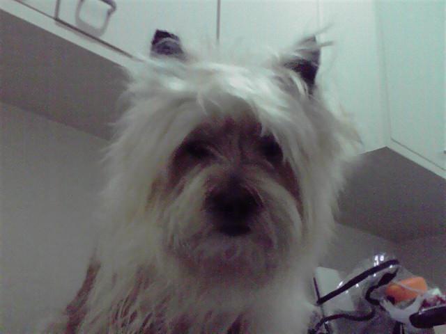 6月12日お風呂犬