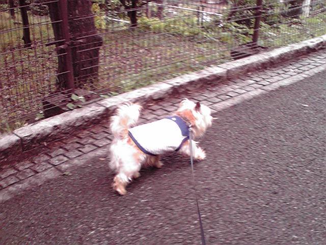 6月14日歩く犬
