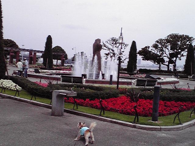 6月18日海の犬