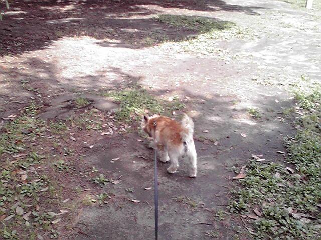 6月28日雨上がりの犬