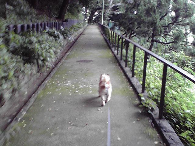 7月3日風が強い犬