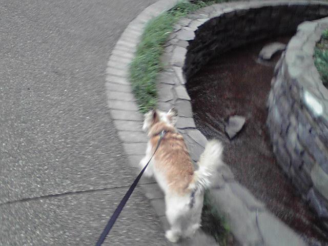 7月4日嵐の前の犬