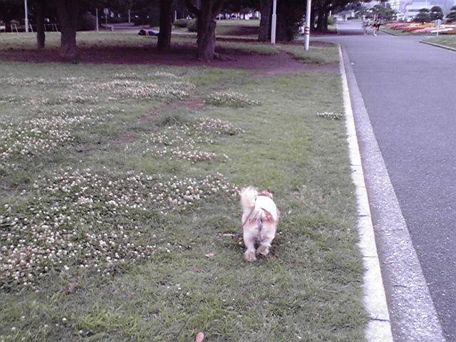 7月8日あっちゅい犬