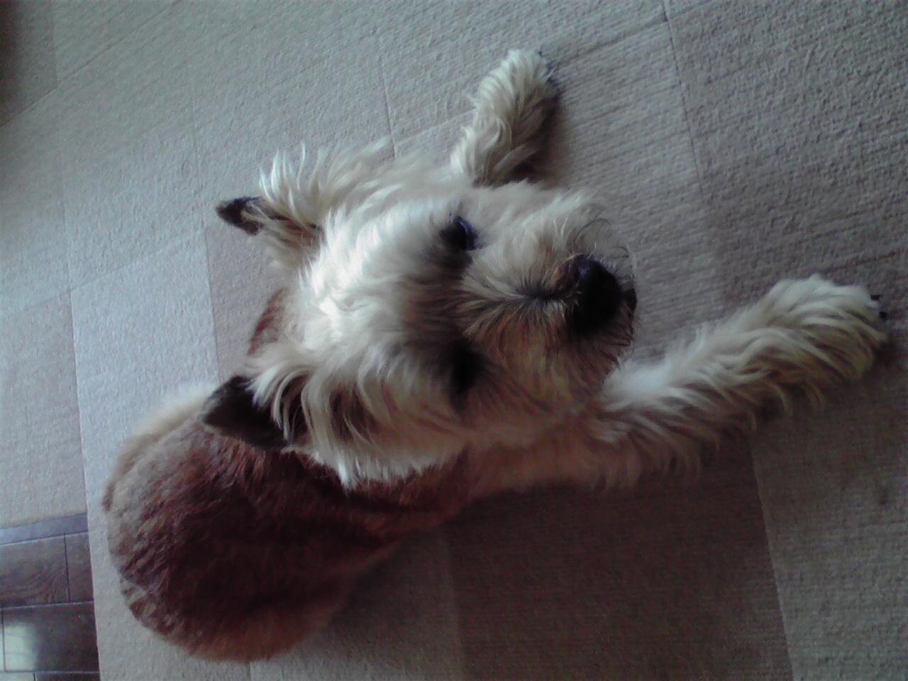 7月9日夜の犬