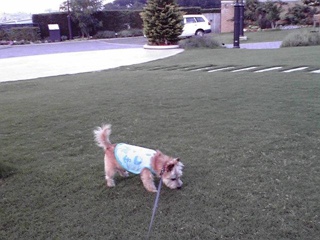 7月10日芝生犬