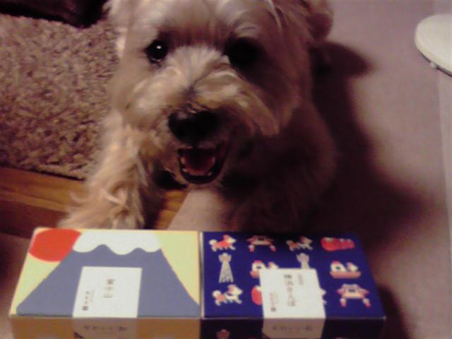 7月11日俺の菓子犬