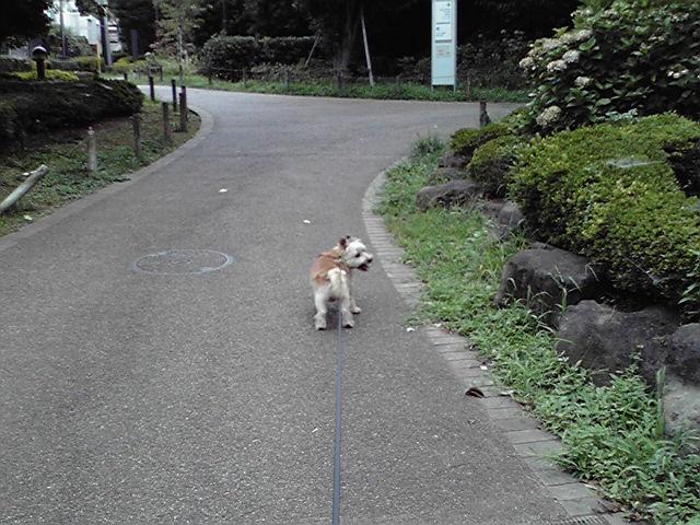 7月17日考える犬