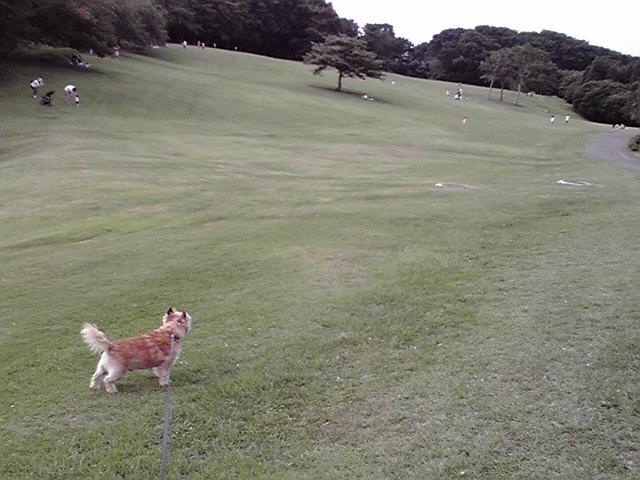 7月20日涼しい犬