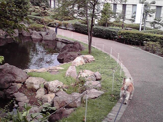 7月30日曇天犬