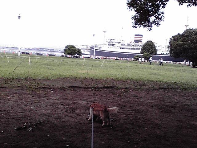 7月31日末日犬