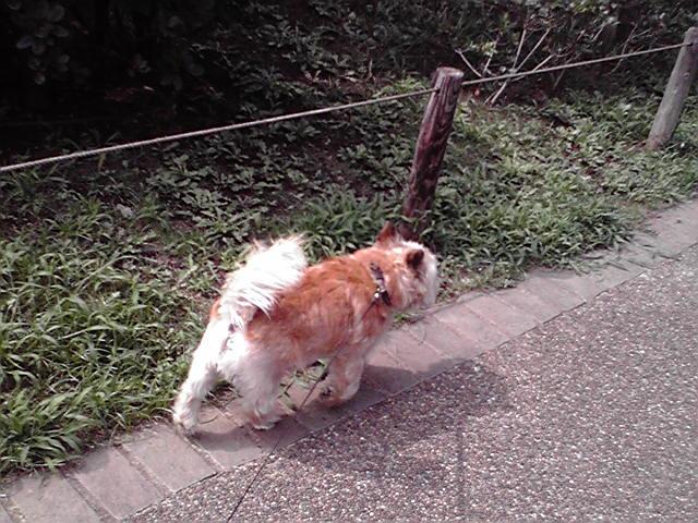 8月1日ととっくま犬