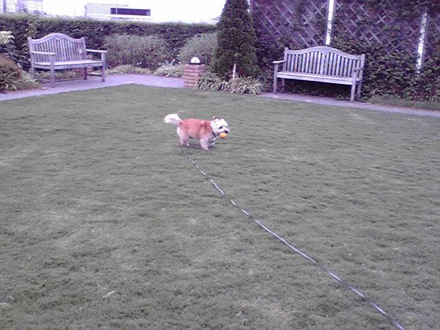 8月2日雷注意報犬