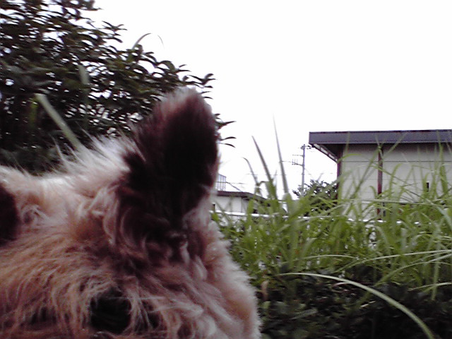 8月3日漁港犬
