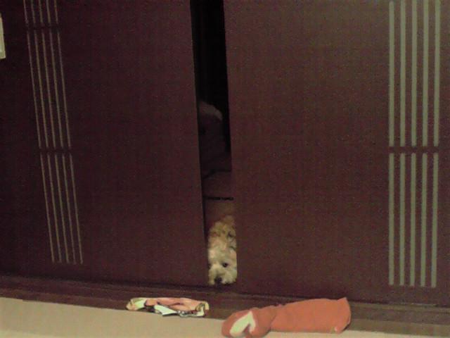 8月13日入り盆犬