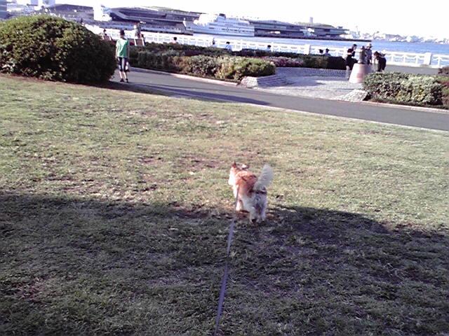 8月28日秋の犬