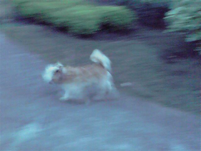 8月30日夏再び犬