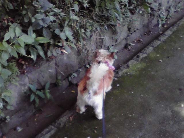 8月31日夏の犬