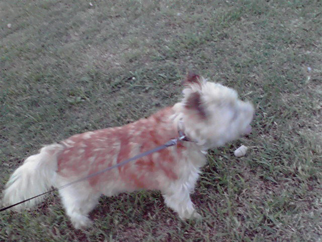 9月4日お誕生日犬